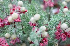 Albero stagionale della neve di inverno di Natale con le bacche rosa e bianche Immagine Stock