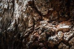 Albero, struttura, dettaglio, fondo, pelle, fine sulla vecchia pelle dell'albero fotografie stock