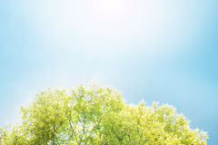 Albero su cielo blu Fotografia Stock Libera da Diritti