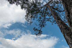 Albero su contro il cielo fotografia stock libera da diritti