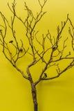 Albero su fondo giallo, verticale Fotografia Stock Libera da Diritti