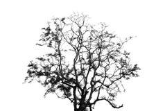 Albero su priorità bassa bianca Fotografie Stock