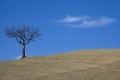 Albero su terreno agricolo Fotografia Stock