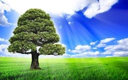 Albero su un bello paesaggio Fotografia Stock