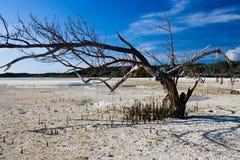 Albero su un'isola abbandonata Fotografia Stock