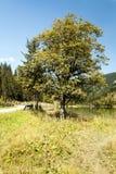 Albero su un percorso accanto ad un lago Fotografie Stock