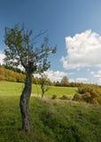 Albero su un prato di autunno fotografia stock