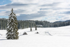 Albero su un prato nevoso Immagine Stock