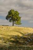 Albero su un verticale della collina Fotografia Stock Libera da Diritti