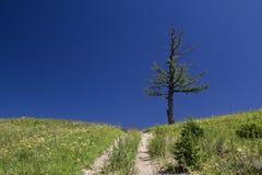 Albero su una collina Fotografia Stock