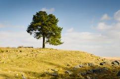 Albero su una collina Immagini Stock Libere da Diritti