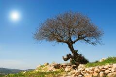 Albero su una collina Fotografie Stock Libere da Diritti