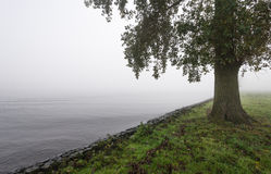 Albero su una mattina nebbiosa sull'orlo di un fiume Immagini Stock