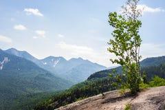 Albero su una montagna Immagine Stock