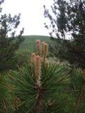 Albero su una montagna Fotografie Stock Libere da Diritti