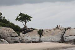 Albero su una roccia Fotografia Stock