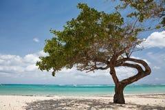 Albero su una spiaggia immagine stock libera da diritti