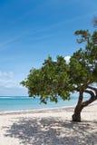 Albero su una spiaggia fotografia stock libera da diritti