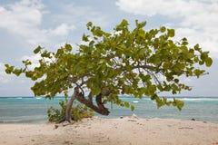Albero su una spiaggia immagine stock