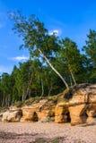 Albero su una spiaggia Fotografia Stock
