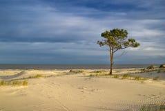 Albero su una spiaggia Fotografie Stock Libere da Diritti