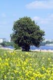 Albero su una spiaggia della città Fotografia Stock Libera da Diritti