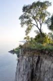 Albero sul bordo della scogliera ed i bluff di Scarborough - del lago Ontario - Toronto Fotografia Stock