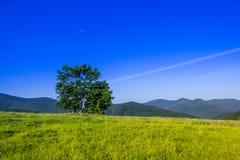 albero sul campo Fotografie Stock