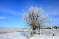 Albero sul campo di inverno immagine stock libera da diritti