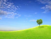 Albero sul campo verde Immagini Stock