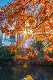Albero sul Central Park Fotografia Stock