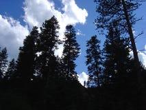 Albero sul cielo Immagini Stock