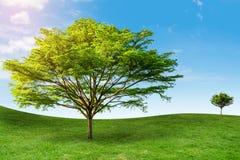 Albero sul cielo del fondo dell'erba Immagine Stock