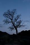Albero sul cielo notturno della priorità bassa Fotografie Stock Libere da Diritti