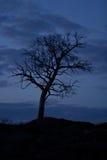 Albero sul cielo notturno della priorità bassa Fotografia Stock