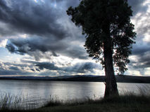 Albero sul lago sotto i cieli drammatici Fotografie Stock Libere da Diritti