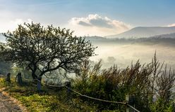 Albero sul pendio di collina sopra la valle rurale Fotografia Stock