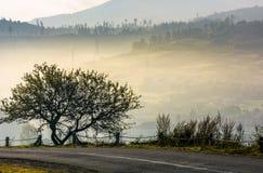 Albero sul pendio di collina sopra la valle rurale Immagine Stock