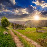 Albero sul percorso del pendio di collina attraverso il prato in montagna nebbiosa a sunse Immagine Stock