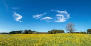Albero sul prato giallo del fiore, sul cielo blu e sulle nuvole bianche Fotografie Stock Libere da Diritti