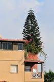 Albero sul tetto Fotografia Stock