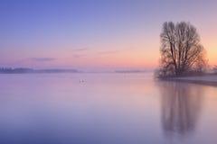 Albero sul water& x27; bordo di s ad alba nei Paesi Bassi Immagine Stock