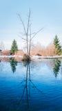Albero sull'acqua fotografia stock libera da diritti