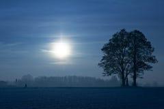 Albero sull'indicatore luminoso del sole Fotografia Stock