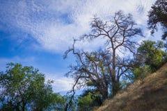Albero sull'orlo del canyon di California immagine stock libera da diritti