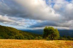 Albero sulla collina Immagini Stock Libere da Diritti