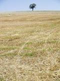 Albero sulla collina Fotografie Stock