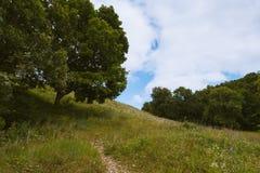 Albero sulla collina Fotografia Stock