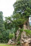 Albero sulla collina molto piccola Fotografie Stock
