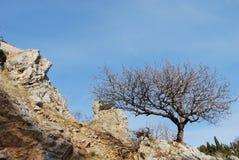 Albero sulla collina rocciosa Fotografia Stock